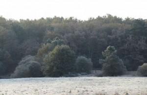 La Jemaye Bois et prés givrés 1