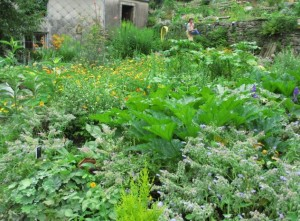 88 PLOMBIERES Fête des Jardins en terrasses Vue des jardins 4red 2014 08 03