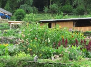 88 PLOMBIERES Fête des Jardins en terrasses Vue des jardins 6 red 2014 08 03