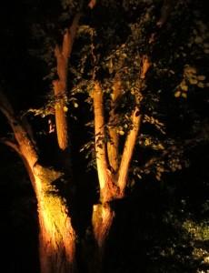 5 Vanxains Tilleul lumière nuit 3 2015 08 17